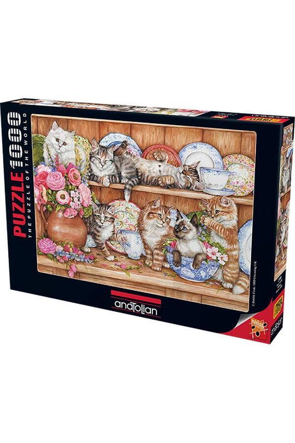 Anatolian - Yavru Kediler / Kittens